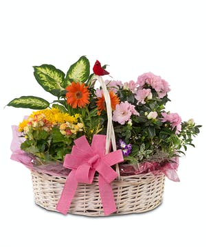 Basket filled with flowering plants