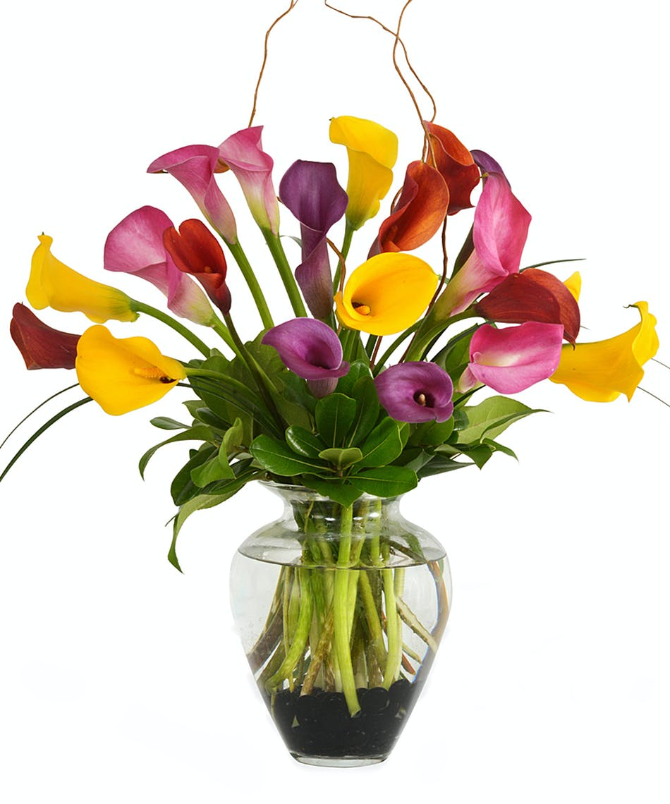 Youre the best calla lilies walter knoll florist saint louis youre the best calla lilies walter knoll florist saint louis mo delivery anywhere your personal florist since 1883 same day delivery izmirmasajfo