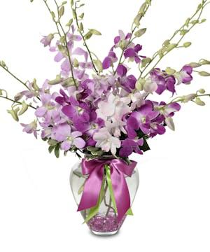 10 or 20 pastel Dendrobium Orchids