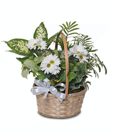 Walter Knoll Florist Assortment of Green Plants