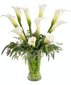 Ten perfect calla lilies in a tinted glass vase