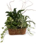 Peace Lily with Green Plants