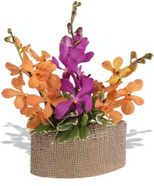 Mokara Orchids in ceramic vase