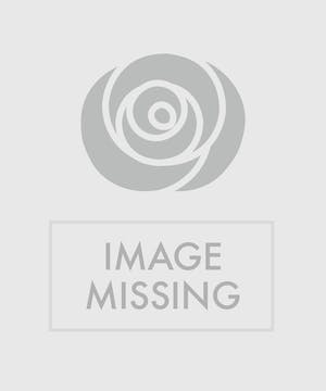 Seasonal plants in angel container