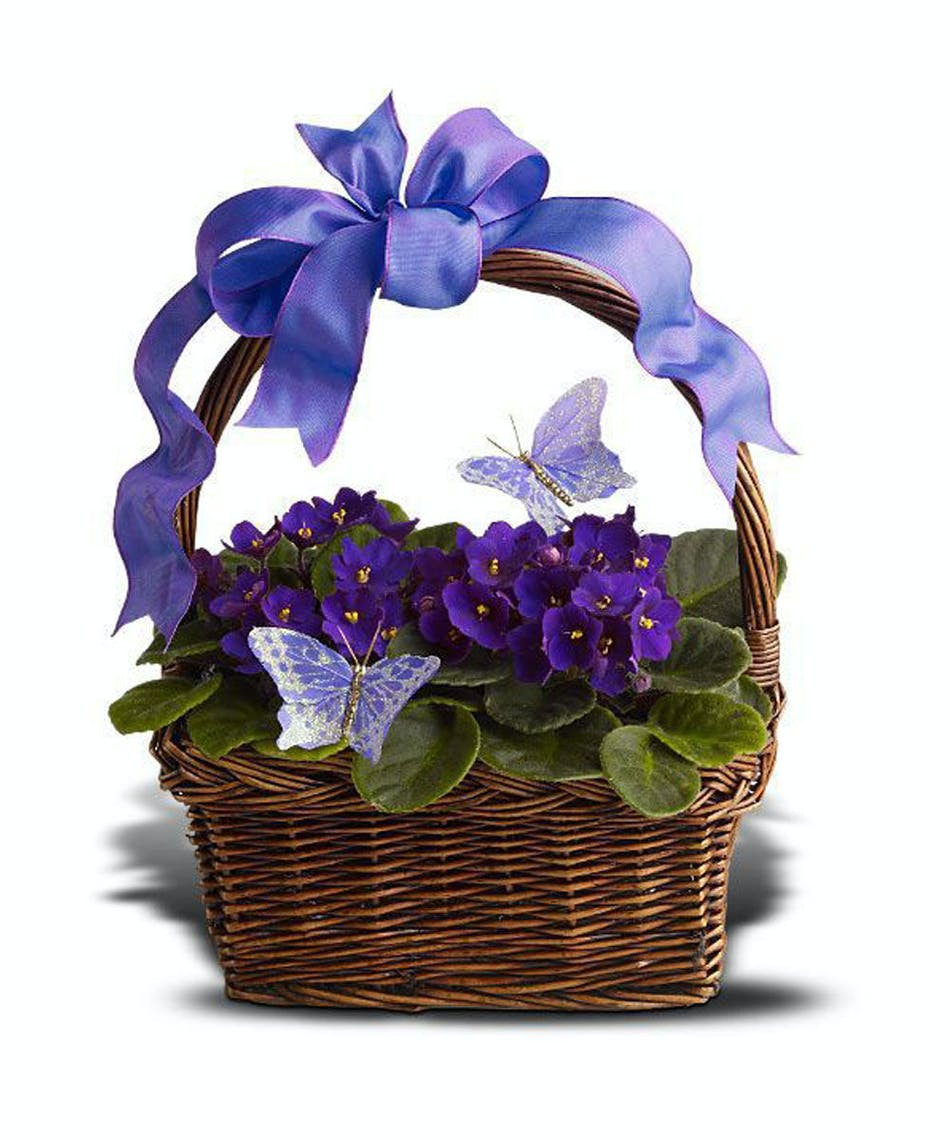 About violets butterflies from walter knoll florist st louis mo negle