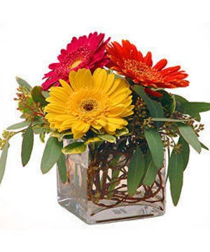Wallter Knoll Florist Glass Cube with Gerbera Daisies