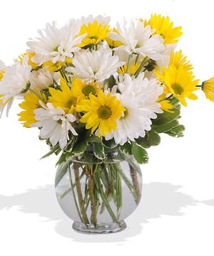 Daisies in a bubble bowl bursting with cheer.