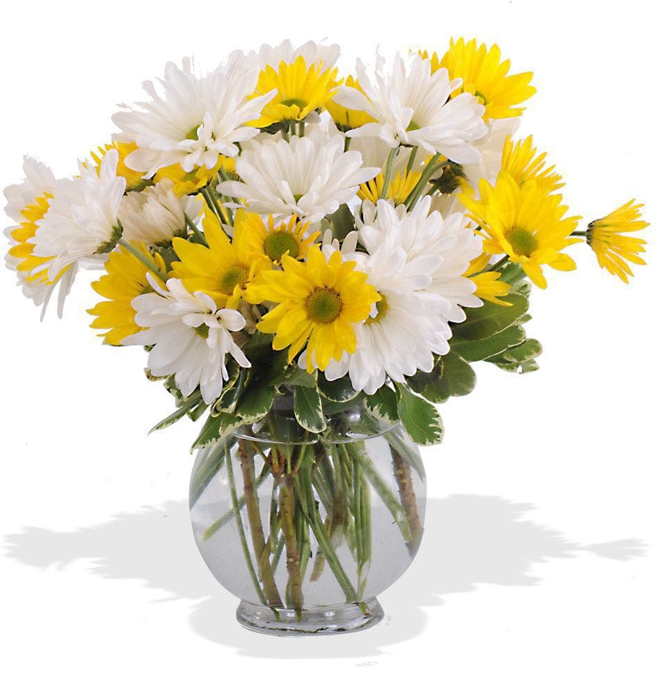Vase bouquets walter knoll florist st louis mo walter knolls dashing daisies bouquet reviewsmspy