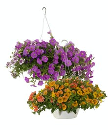 Amish Hanging Baskets
