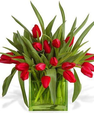 Love springs for tulips.