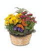 Blooming Baskets - Small