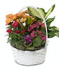 Blooming Baskets - Medium